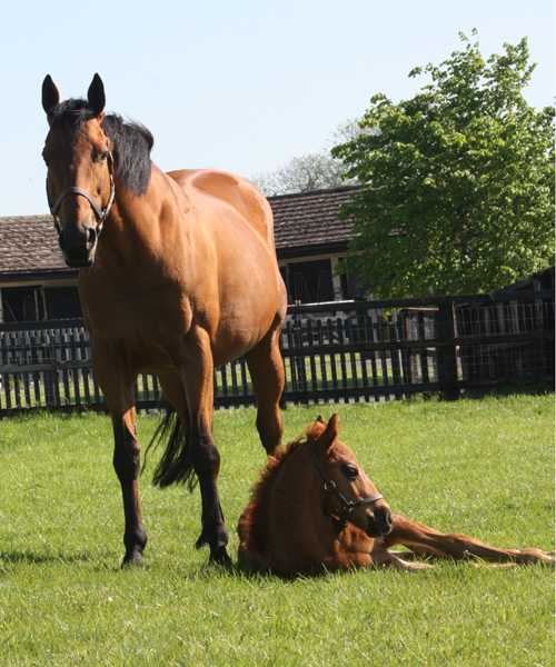 Never A Doubt and her filly by Equiano (Posted 20/08/2018)
