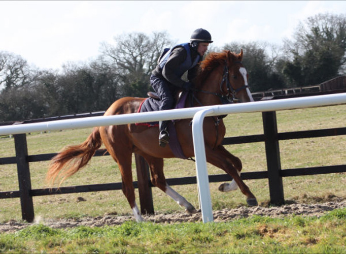 Barry Taylors Medicean colt under Gary enjoying the spring sunshine (Posted 20/08/2018)