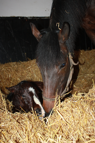 Spunger with her Compton Place colt (Posted 20/08/2018)
