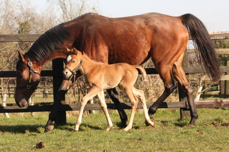Celebrity and her Dutch Art filly (Posted 20/08/2018)