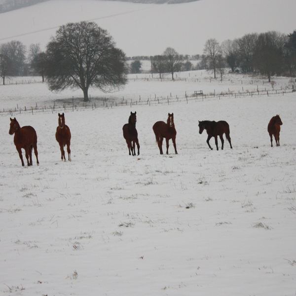 Yearling Fillies in the snow (Posted 20/08/2018)