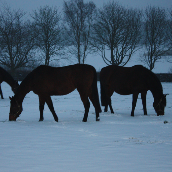 Mares in the snow (Posted 20/08/2018)