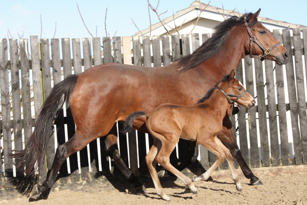 Seven day old colt by Casamento is a beauty. (Posted 20/08/2018)